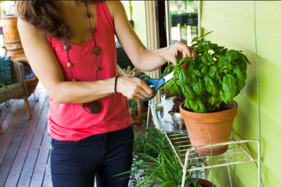 How To START Organic Vegetables In Pots